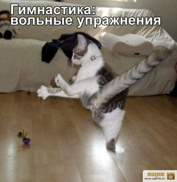 Улыбнемся братьям нашим меньшим)