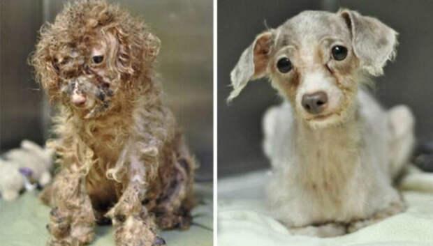 16 историй спасения собак, находящихся на грани смерти, в стиле «до ипосле»