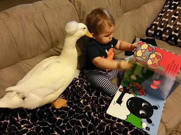 Эта забавная дружба ребенка и утки покорила сеть!