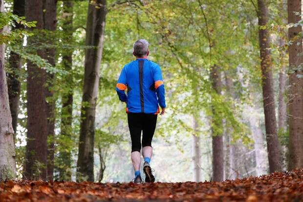 Маршрут проходит по живописным аллеям парка / Фото: pixabay.com