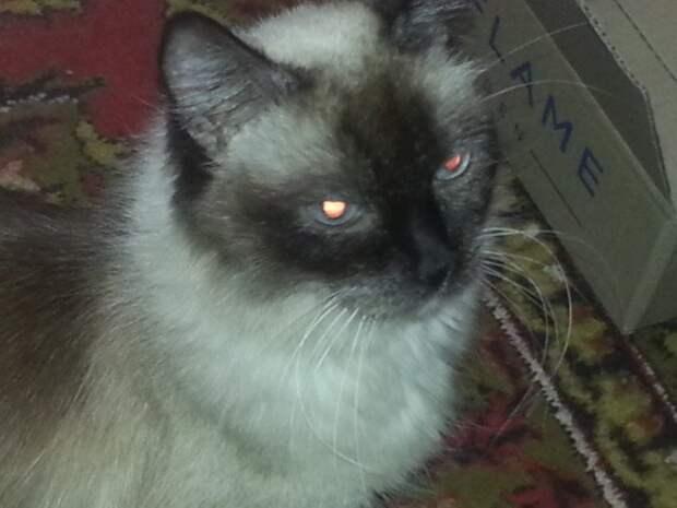 Старая больная злая кошка