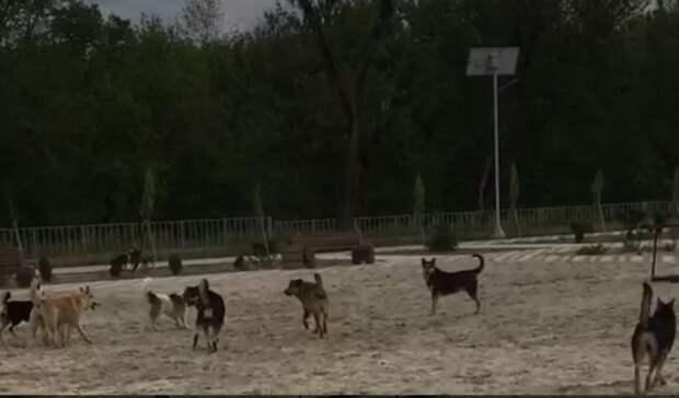 Свора из30 бездомных собак оккупировала Зеленый остров вРостове