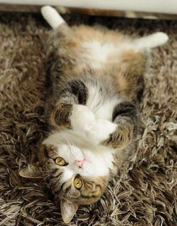 Фото котов, которые не поддаются логическому объяснению