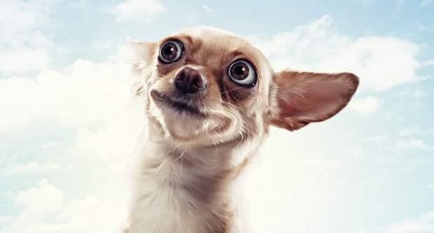 Блог Павла Аксенова. Анекдоты от Пафнутия. Фото SergeyNivens - Depositphotos