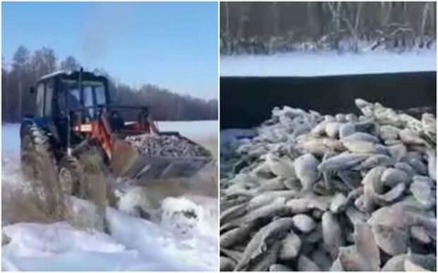 Зимняя рыбалка началась: улов пришлось грузить ковшами