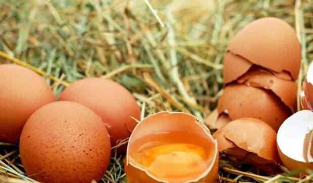 Нелегальные турецкие куриные яйца задержали награнице вСеверной Осетии