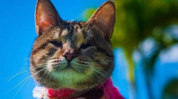Слепая кошка упала в сливную трубу. Хорошо, что её заметил добрый человек