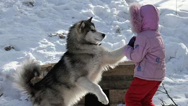 Ученые вычислили истинный возраст людей и собак