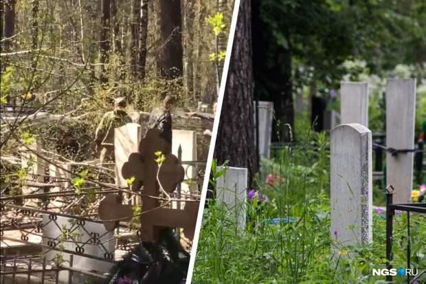 Дерево упало на женщину на Заельцовском кладбище из-за сильного ветра — видео с места происшествия