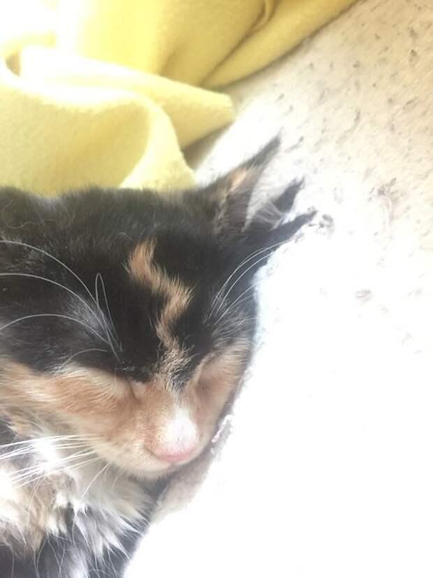 Кото-Поттер животные, забавно, коты, кошки, неожиданно, окрас, окрас кошек, фото