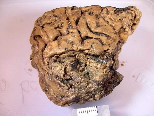 Тот самый древний мозг / © Alex Petzold