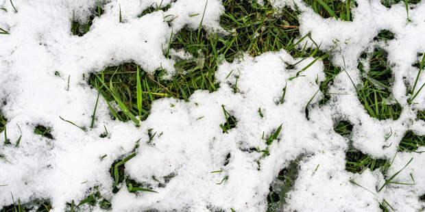 В Новосибирске выпал первый снег