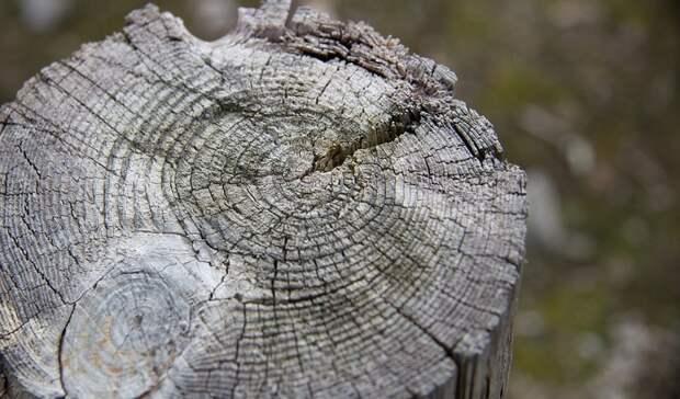 Прокуратура заинтересовалась вырубкой деревьев для военной инсталляции в Оренбурге