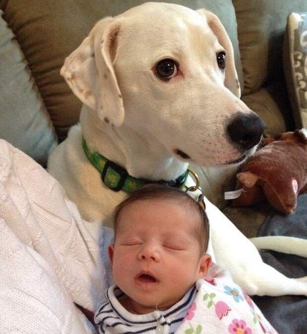 17 доказательств, что животные готовы на все ради заботы о хозяйском детеныше!