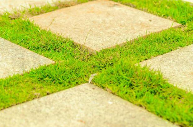 Трава между камнями выглядит очень живописно