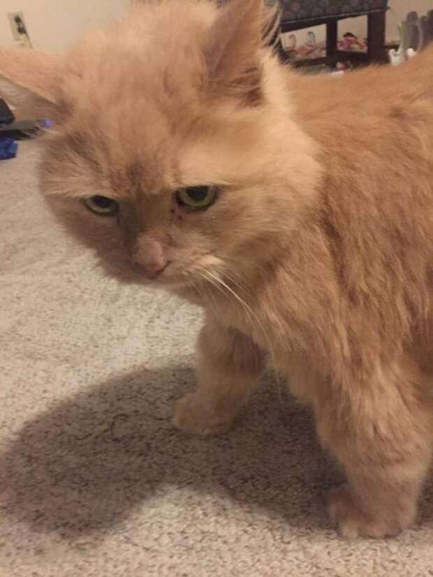 Девушка забрала из приюта 16-летнего кота, которого никто не хотел брать