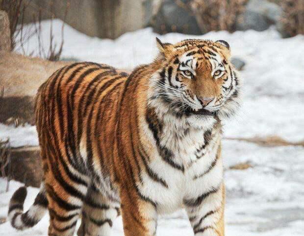 Забавные животные животные, природа, фото