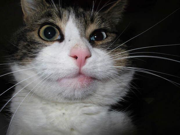4. Слегка перекосило животные, кот, оса, пчела, реакция, ужаление, укус