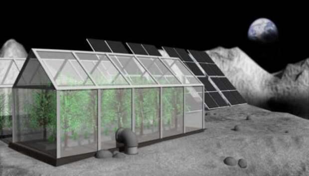 Что случилось с первым растением на Луне? (4 фото)