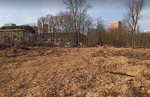 В Подмосковье ради строительства ЖК вырубили Аллею ветеранов. Ее высадили 70 лет назад участники войны