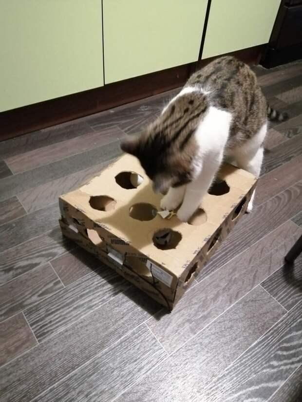 Парень взял кошку в дом, а потом уехал, бросив её. А бедняжка не умела выживать на улице