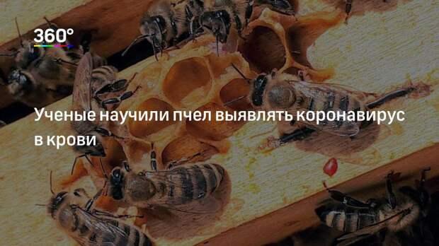 Ученые научили пчел выявлять коронавирус в крови