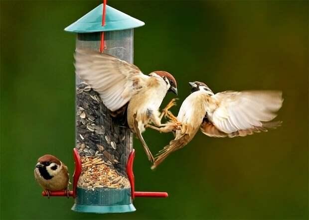 Да что там с другими птицами, они за корм даже друг с другом дерутся!