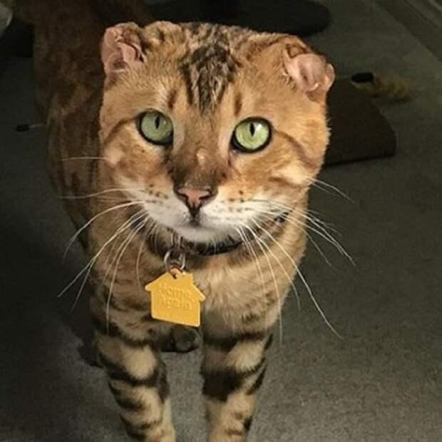 Кот стоит