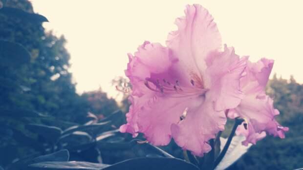В Ботаническом саду высадят новые растения