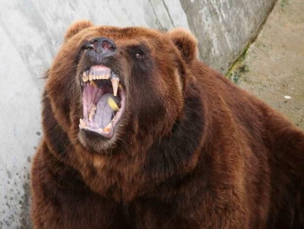 В тайге на брата напало нечто. Думали медведь-шатун, но оказалось другое...Реальный случай