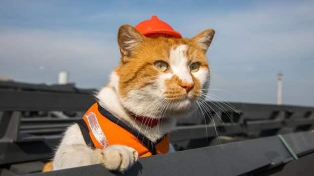 Известные звери-блогеры кот Мостик и енот Тема встретились в Крыму