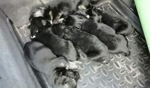 Оренбуржцы нашли на берегу реки мешок с забитой насмерть собакой и щенками (18+)