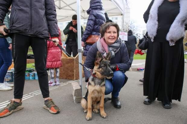 Светлана Разворотнева провела благотворительный фестиваль «Дом для хвостатых на раз-два-три»