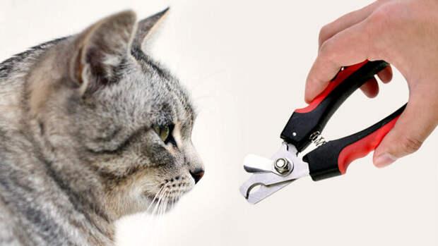 Зачем кошке маникюр?