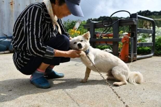 Собака два дня согревала пропавшую 93-летнюю хозяйку — и этим спасла ей жизнь