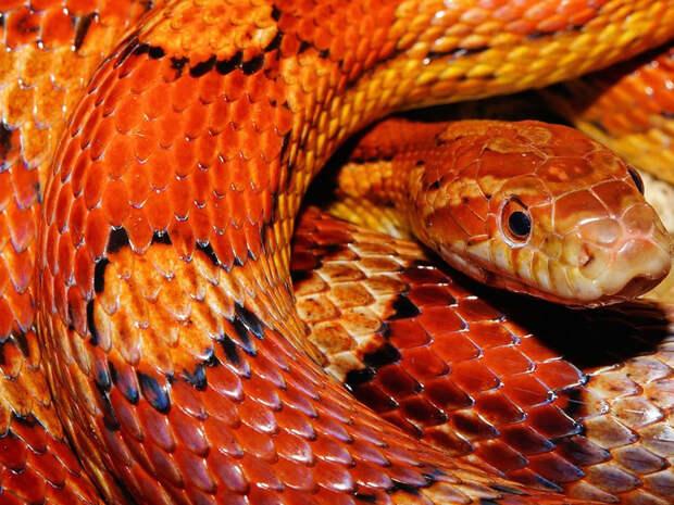 Совсем запарились: змеи напрыгивают на людей
