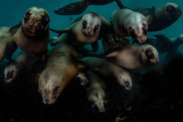 15 потрясающих фотографий подводного мира с международного конкурса