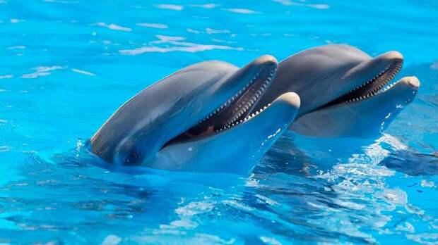 Всуд подали навладельца дельфинов иморских львов вРостове