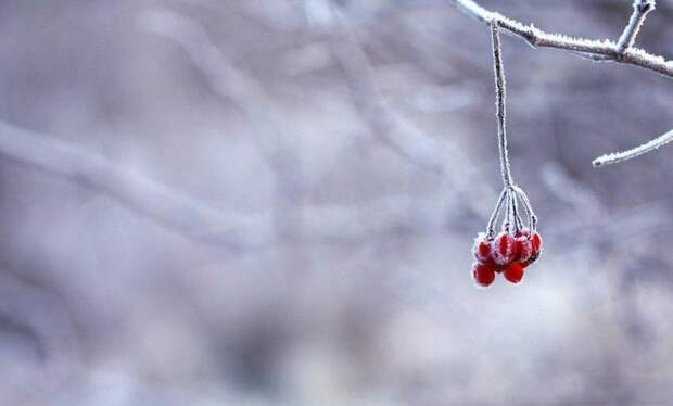 Зима/ Фото pixabay.com