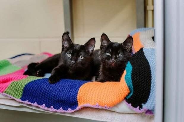 Дрожа от холода, на улице лежали котята. Один из них обнимал лапами слепого братишку, чтобы тот не замерз