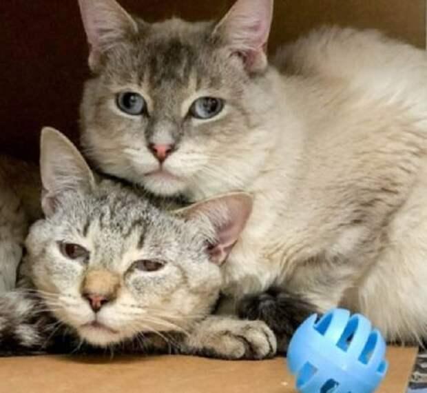 Повсюду раздавалось отчаянное мяуканье: в подвале дома мучилось более 70 кошек и котят