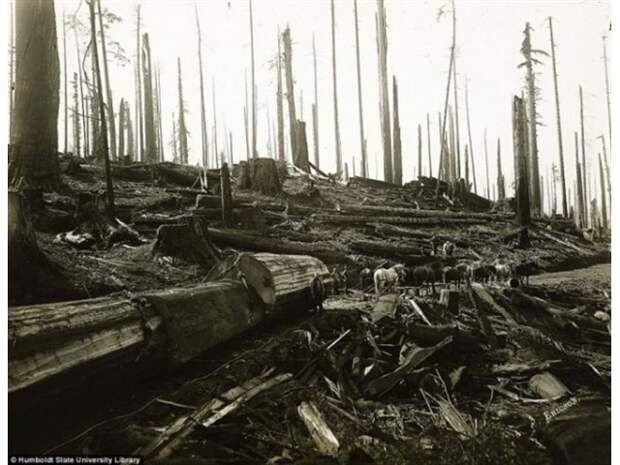 Когда деревья были огромными