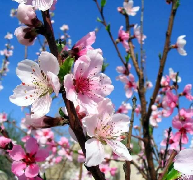 Майские хлопоты или 3 важных дела , которые нужно сделать в саду в начале мая