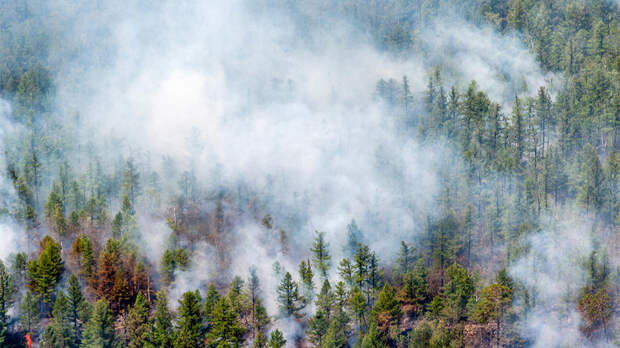 Климатологи опасаются массовых лесных пожаров из-за аномальной жары