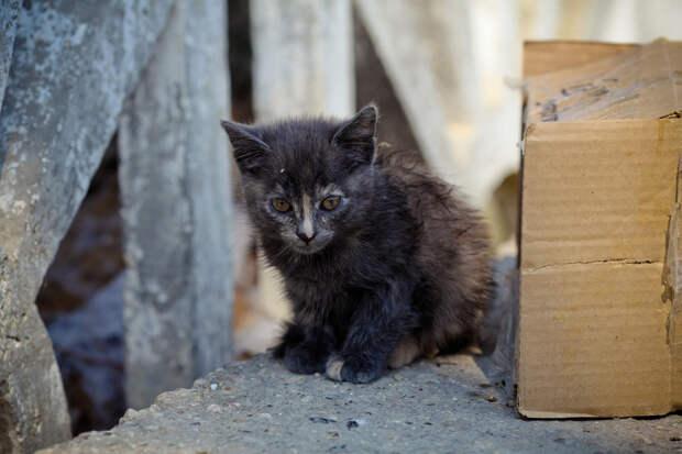 Истории со счастливым концом о том, что случается, когда люди проявляют заботу по отношению к бездомным животным