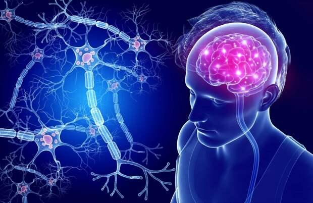 В мозге найдены новые типы клеток с неизвестной функцией