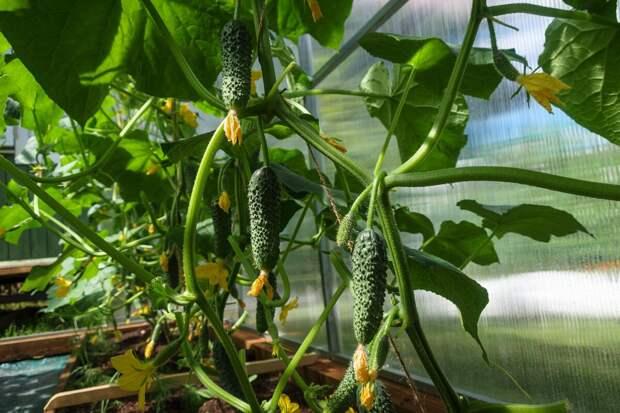 4 совета по размещению теплицы, чтобы всегда был урожай.