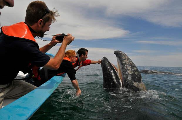 Как целоваться с китом?