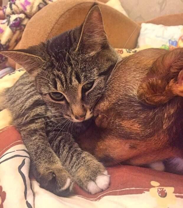 На даче кошка перестала узнавать вернувшуюся с прогулки собаку. Решили выяснить почему, проведя эксперимент