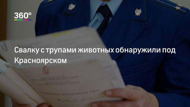Свалку с трупами животных обнаружили под Красноярском